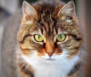 Katzenalter in Menschenalter umrechnen