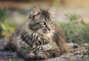 Katzenjahre in Menschenjahre umrechnen