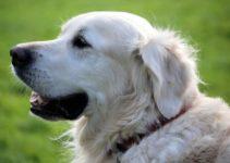 alter eines Hundes berechnen