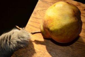 giftige lebensmittel fuer katzen