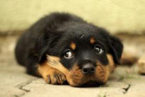 was tun bei schluckauf hunde