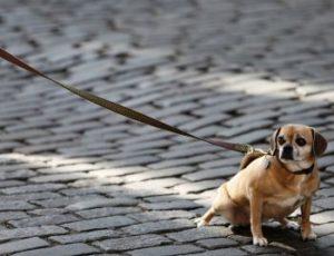 Hundeleine kleine Hunde