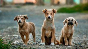 Hundenamen kleine Hunderasse