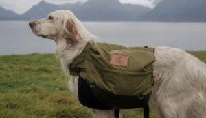 Hunderucksack für Hunde