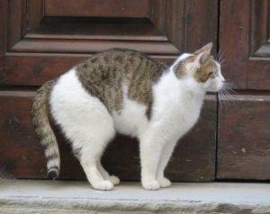 Katzenklappen einbauen