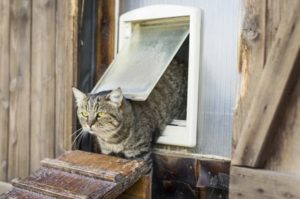 beste Katzenklappe Test