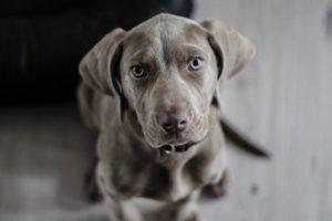 besten Hundenamen Top Liste