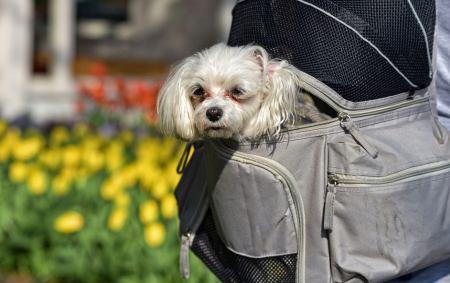 bester Hunderucksack Test