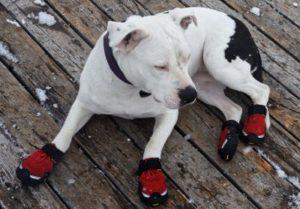 Bestenliste Hundeschuhe Vergleich und Testsieger