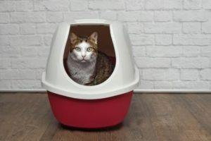Bestenliste Katzenklo Testsieger