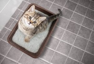 Bestenliste Katzenstreu Vergleich
