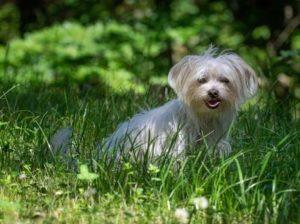Hundekrankheiten Allergien