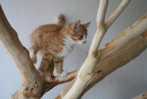 Katzenbaum Wohnung