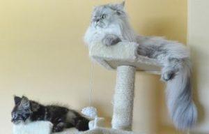 Kratzbaum fuer 2 Katzen