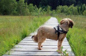 bestes Hundegeschirr test