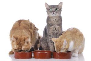 bestes Katzenfutter Test