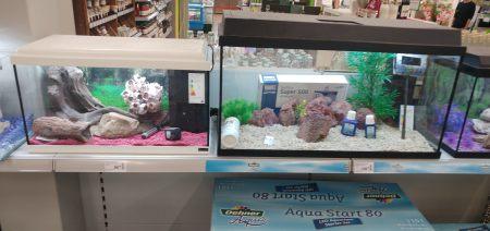 Aquarien Aquaristik