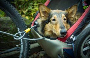 Bester Hundefahrradanhaenger Test