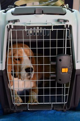Hundetransportbox Test