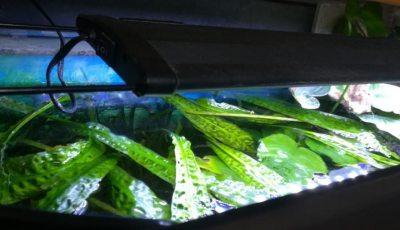 Aquarium Beleuchtung Welche Lichtfarbe | Beste Led Aquarium Beleuchtung Test Vergleich Wichtige Infos