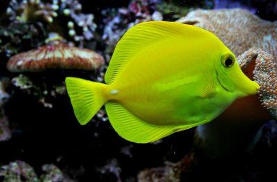 salzwasser aquarium led licht