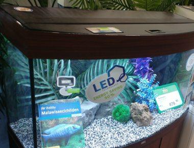 Aquarium Salzwasser