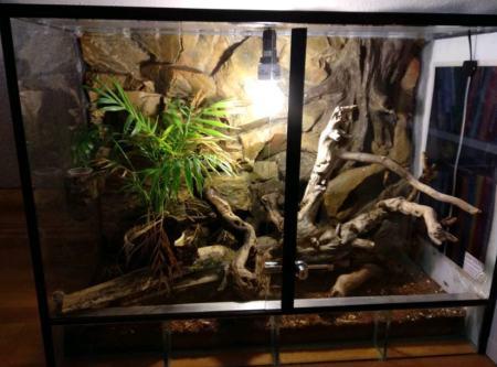 Gecko Terrarium kaufen