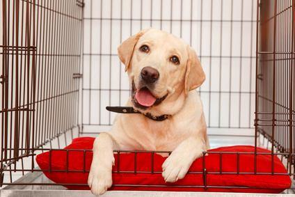 bester Hundekäfig Test faltbar