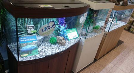 bestes Aquarium Test