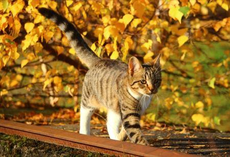 bestes Katzen GPS Tracker Test
