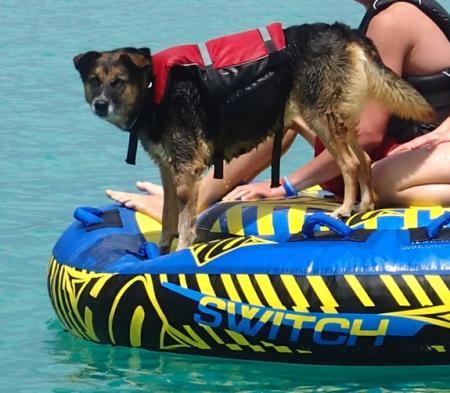 Hund mit Schwimmweste