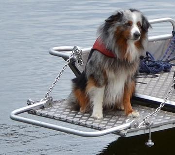 Hundeschwimmweste vergleich