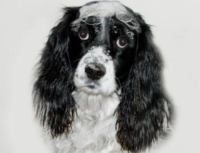 Hundeshampoo Vergleich
