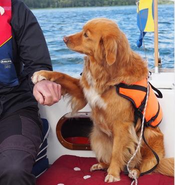 beste Hundeschwimmweste Test