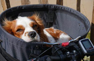 Bestenliste Hundefahrradkorb empfehlungen