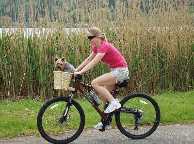 Fahrradkorb Hunde am Lenker