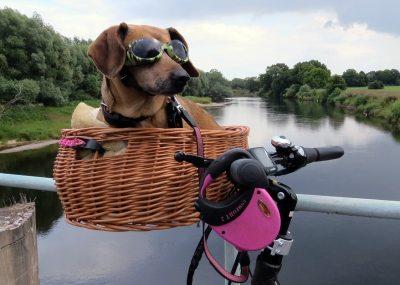 Hundefahrradkorb Testsieger