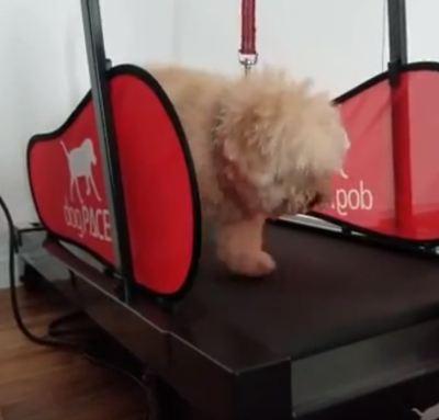Hundelaufband Testsieger Tretmühle