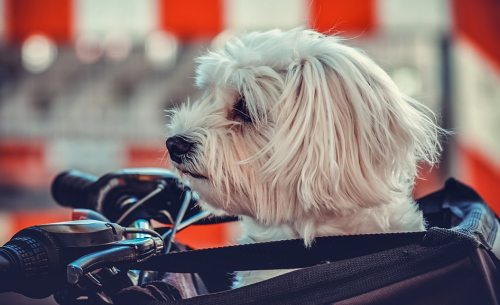 bester Hundefahrradkorb Test