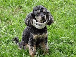 Erste Hilfe Kurs für Hunde Kaufempfehlung