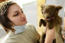 Erste Hilfe Kurs für Hunde Test