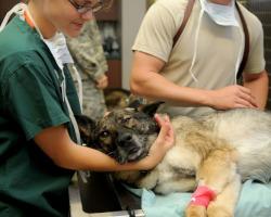 Erste Hilfe Kurs für Hunde Testbericht