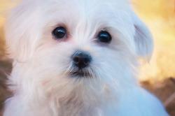 Hundeschermaschine Kaufempfehlung