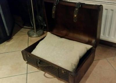 Katzenbett Kaufempfehlung Koffer
