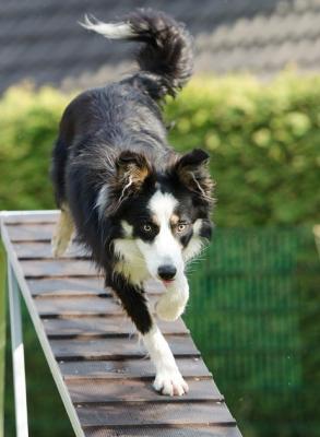 Online Hundeschule Vergleich Test