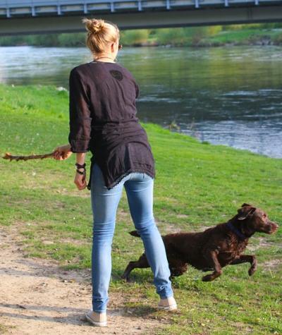 Online Hundetraining Anbieter
