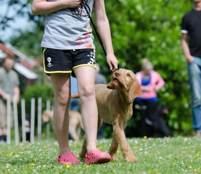 Online Hundetraining Vergleich Kurs
