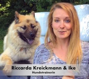 Online Hundetraining Vergleich