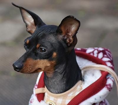 Bester Hundepullover Testbericht