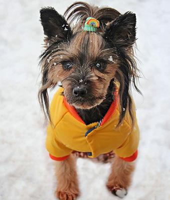 Bester Hundepullover Testsieger